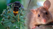 Insectes / Rongeurs - Produits insecticides et rodenticides